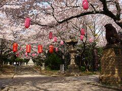 桜の名所として親しまれている大山緑地(写真提供:高浜市)