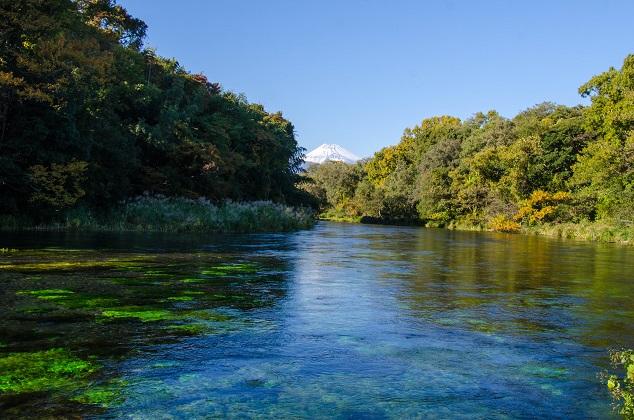 湧水量日本一を誇る、柿田川湧水群