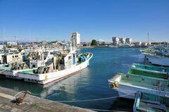 吉田漁港は日本でも有数のしらす漁港