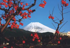愛鷹山麓が原産といわれる四ッ溝柿と富士山(写真提供:長泉町)