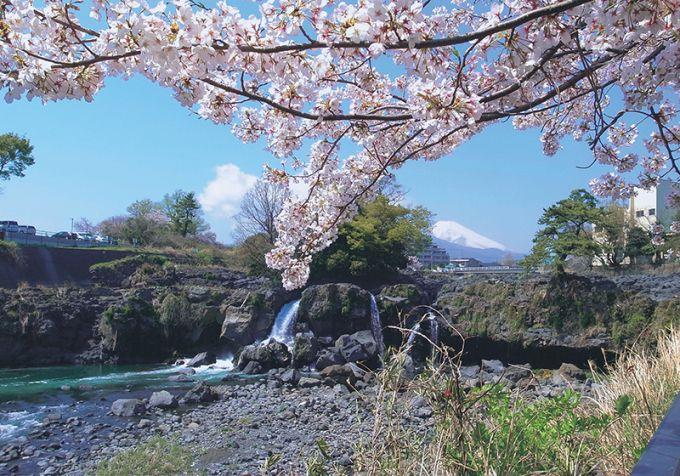 溶岩の間から流れ落ちる「鮎壺の滝」(写真提供:長泉町)