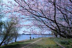 都会のオアシス佐鳴湖公園