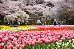四季折々の花々が織り成す憩いのガーデン