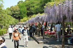 市民の憩いの場、蓮華寺池公園。藤の名所として知られ、GWの藤まつりの期間には約20万人が訪れる(写真提供:藤枝市)