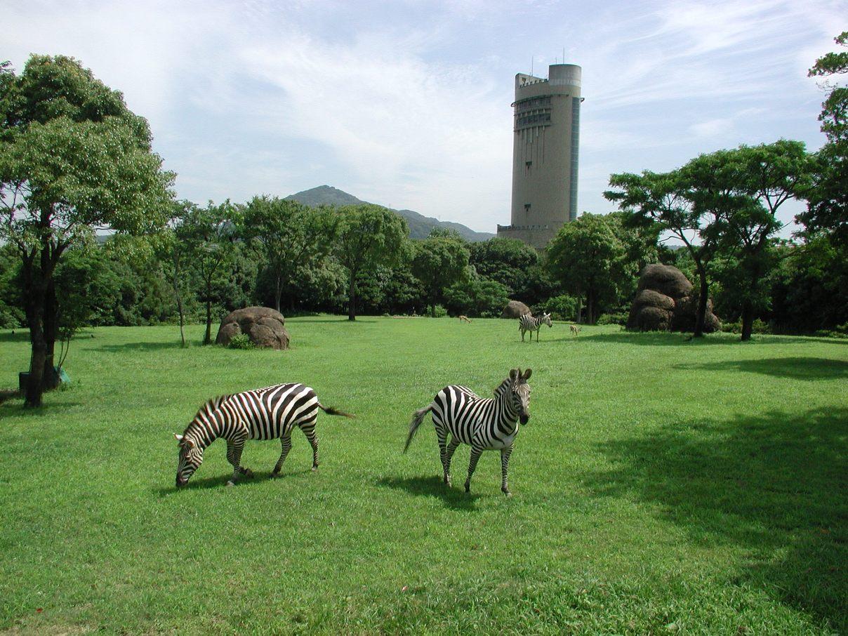 豊橋総合動植物公園 のんほいパーク(シマウマ)