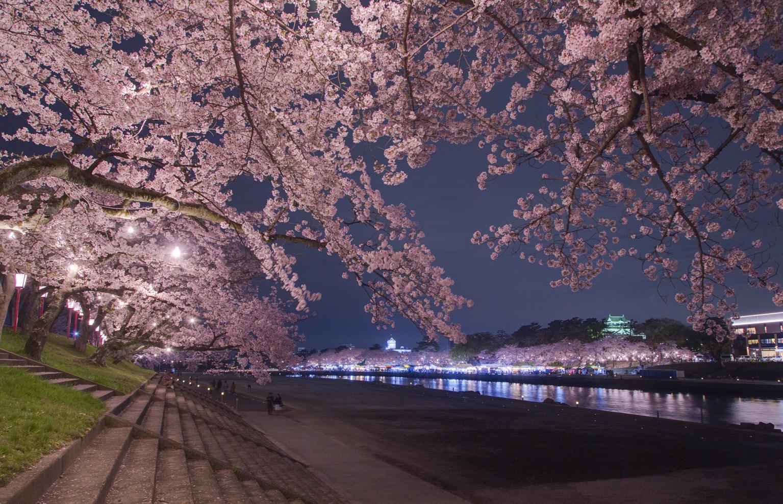 春らんまん、乙川の桜景色(写真提供:岡崎市)