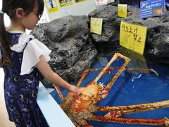 竹島水族館のタカアシガニ(写真提供:蒲郡市)