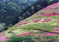四季折々の花に彩られる姫の沢公園(写真提供:熱海市)