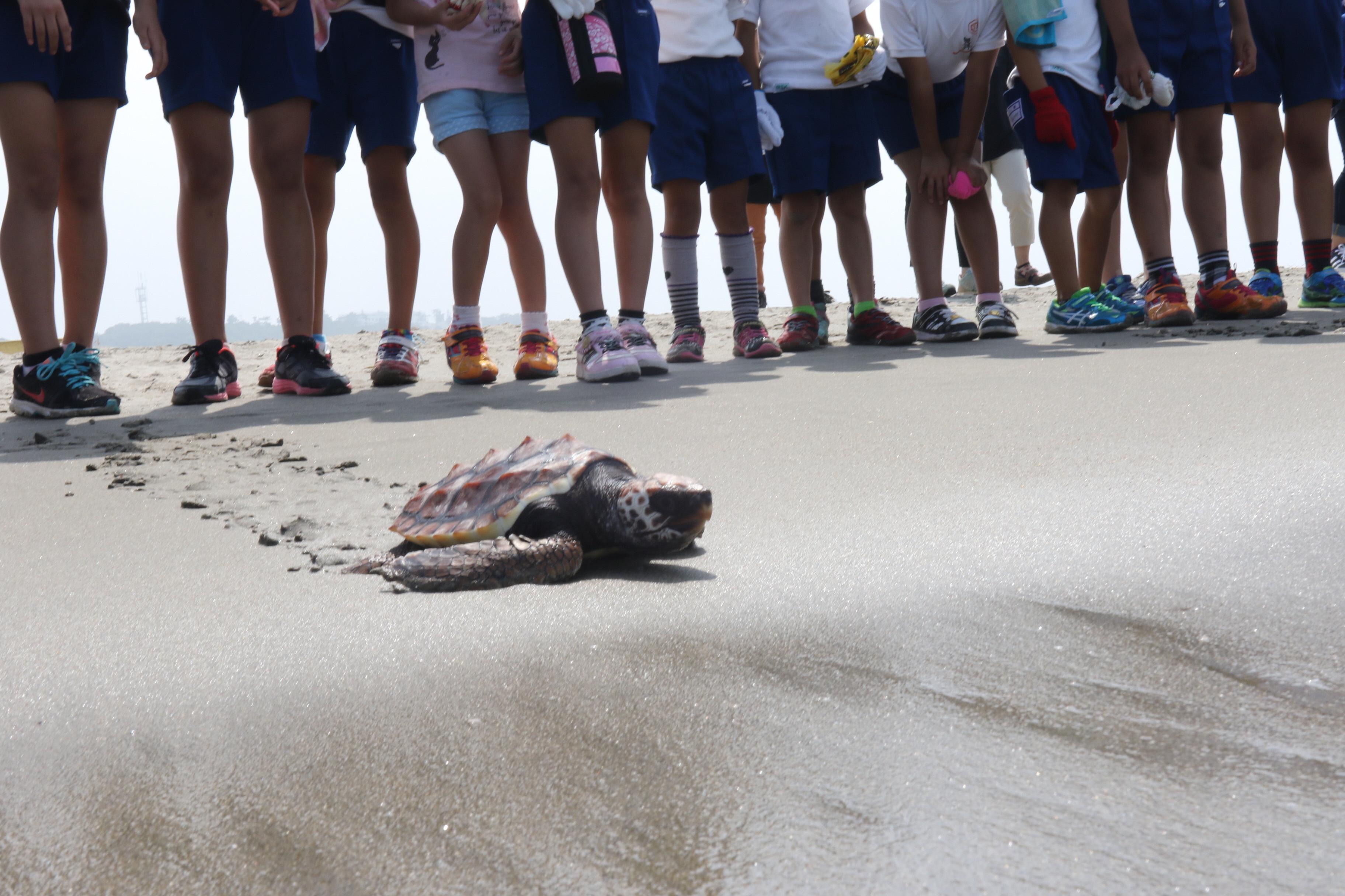 子どもたちがウミガメを放流