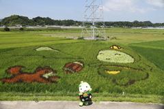 田んぼアート菊川(写真提供:菊川市)