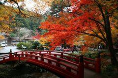 小國神社の紅葉(写真提供:森町)