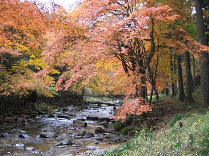しっとり色づく巴川の紅葉(写真提供:新城市)