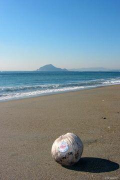 砂浜が美しい恋路ヶ浜(写真提供:田原市)