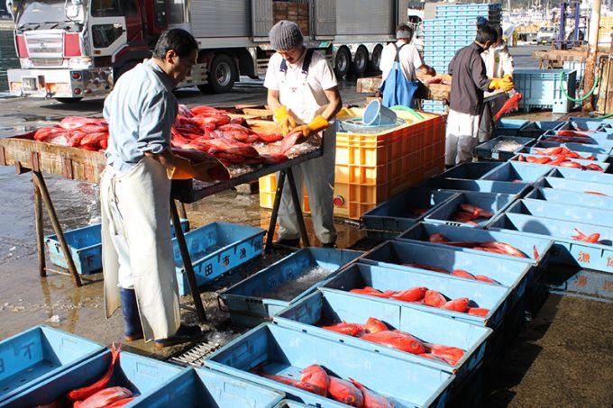 キンメダイが揚がる魚市場(写真提供:下田市)