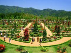 バラの名所、河津バガテル公園(写真提供:河津町)