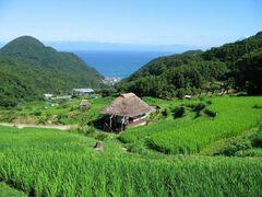 緑鮮やかな石部の棚田(写真提供:松崎町)