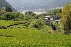 茶畑とSL(写真提供:川根本町)