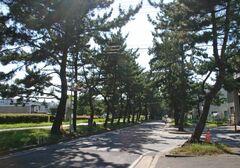 旧東海道の松並木(写真提供:知立市)