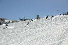 冬の茶臼山高原ではスキーを楽しめる(写真提供:豊根村)