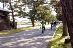 松並木の中をゆるゆるサイクリング
