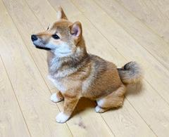 犬と暮らす家『床』を考えるのイメージ