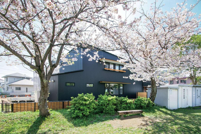 春になると隣の公園に咲く満開の桜は、借景として建築に取り入れている