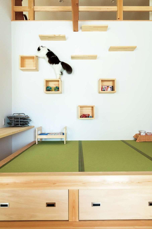 福工房【趣味、自然素材、平屋】和室の壁はキャットウォークに。飾り棚にもなる小箱をうまく活用してインテリア性もアップ