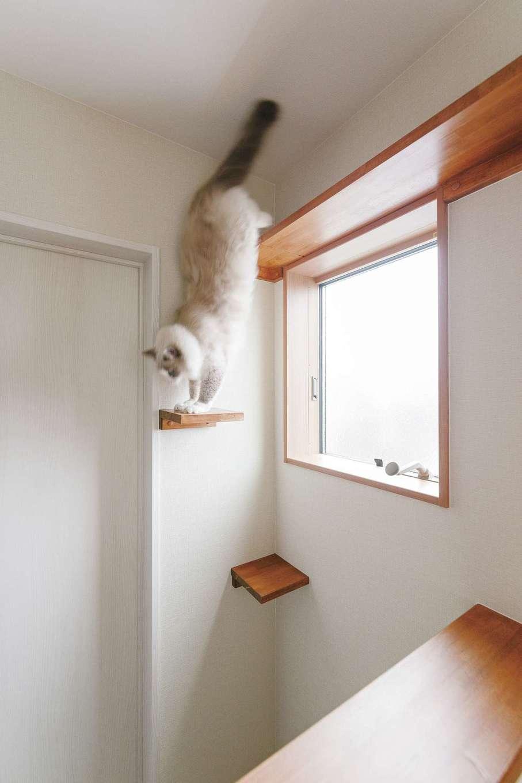 桜建築デザイン【省エネ、間取り、ペット】2階廊下には猫ちゃん用のステップを設け、自由に遊べる空間に。アパート暮らしでの運動不足も解消できそう