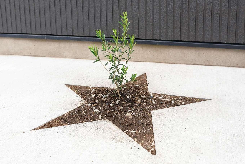 irohaco (アヴァンス)【子育て、二世帯住宅、狭小住宅】シンボルツリーの成長も楽しみ