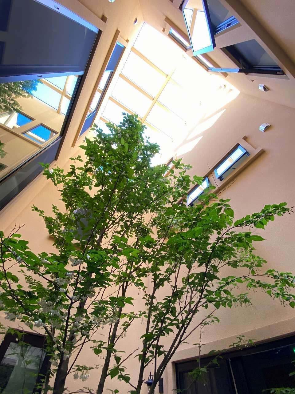 ツリーズ【デザイン住宅、輸入住宅、建築家】トップライトから中庭に燦々と光が降り注ぐ。この中庭から視線が空へ抜けていく雰囲気もおもてなしのひとつ