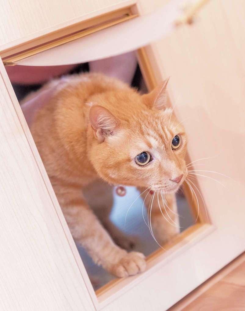 愛猫にとって快適な家というのも大きなテーマ。家中を自由に歩き回れるキャットウォークも、猫好き営業マンからの提案