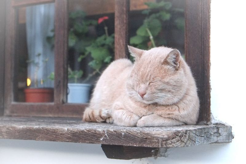 眠くて勉強に集中できない人をイメージした猫