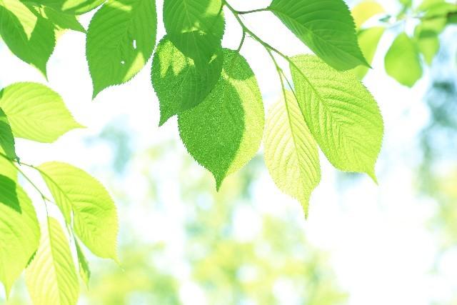 生物の頻出範囲である植物と葉脈