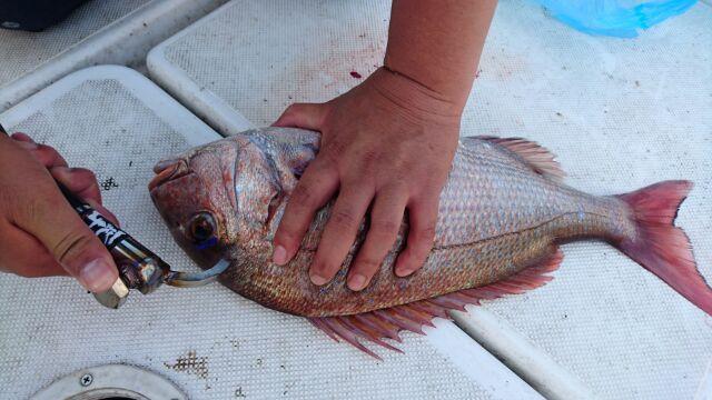 魚を〆る話題の道具 NABURA「一...