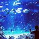 ナイトアクアリウムの楽しみ方&おすすめ水族館3選!【首都圏】
