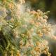 花粉の季節。新生児を外に出したら花粉症になってしまうの?