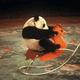 埼玉県のおすすめ動物園&牧場|ふれあい体験、無料スポットも