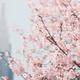芝生を楽しめる公園【東京・新宿御苑】春から初夏にお勧め!