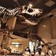 恐竜博物館の見どころは?大迫力の化石を見て、発掘体験もできる!|関東編