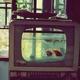 新江ノ島水族館☆雨の日のおでかけにおすすめ|神奈川・湘南