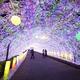 2014年イルミネーション!300mの光のトンネルが見所の時之栖