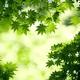 自然溢れる里山公園。春の里山公園まつり☆|神奈川_茅ヶ崎
