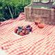 芝生に観覧車に水族館に電車も!子連れピクニックならぴったり☆葛西臨海公園【東京】