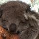 コアラ、カピバラもいる!埼玉こども自然動物公園が子どもに人気