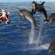 東京からも近い鴨川シーワールド!まだ間に合うクリスマスのイベント