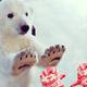 札幌市円山動物園はお正月の三が日が無料開放!?冬もイベントが満載!