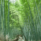 報国寺の竹の庭でリラックス 日差しを避け日陰で涼しく【鎌倉】