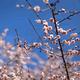 子どもの写真撮影!プロが選ぶ冬の東京おすすめスポット|羽根木公園