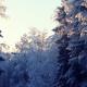 日帰りで樹氷を楽しもう!蔵王だけじゃない、西湖樹氷まつり|山梨