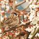 今年も春はすぐそこ!東京都内の子どもとおでかけしたい梅の名所4選